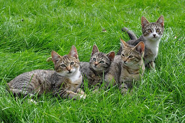 Tabby kittens stock photo