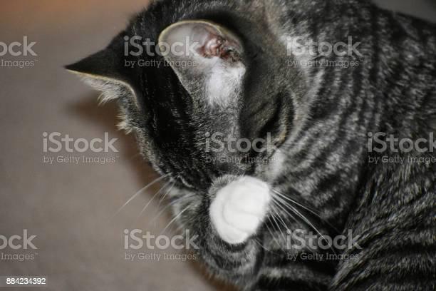 Tabby manx kitten picture id884234392?b=1&k=6&m=884234392&s=612x612&h=mhbhwzd 8n54dafujfz1uhxfndhex0lxgclkz6505ku=