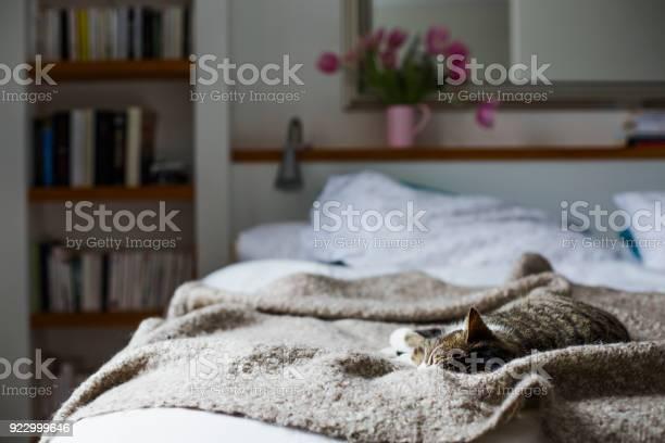 Tabby on a bed picture id922999646?b=1&k=6&m=922999646&s=612x612&h=plqt3nzg6h9wi7q8uuwanyz8lx9blmwduaom3gkqjs0=