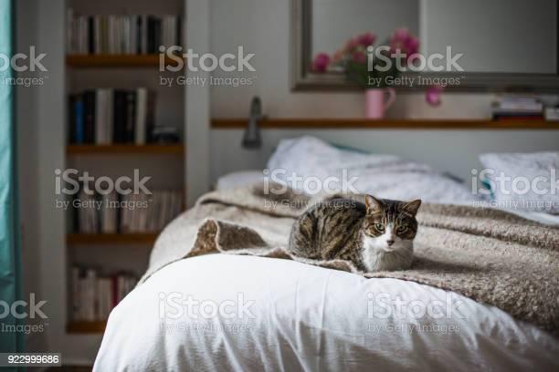 Tabby on a bed picture id922999686?b=1&k=6&m=922999686&s=612x612&h=sxnx kru4p cc5qmt02lrfkgcqqljivhltuorl8sors=