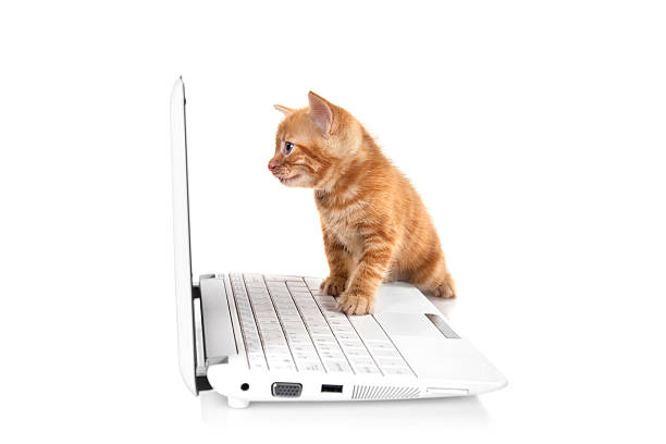 Tabby small kitten looking at the screen picture id184272809?b=1&k=6&m=184272809&s=612x612&w=0&h=wz7reqhtnzujrelynwmigdlial8van9vi6ciktcwgow=