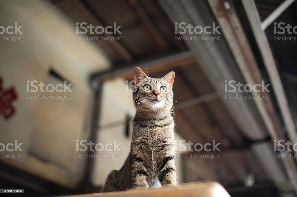 Tabby striped cat look around curiously on the top stock photo