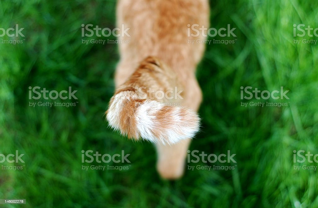 Tabby tail stock photo