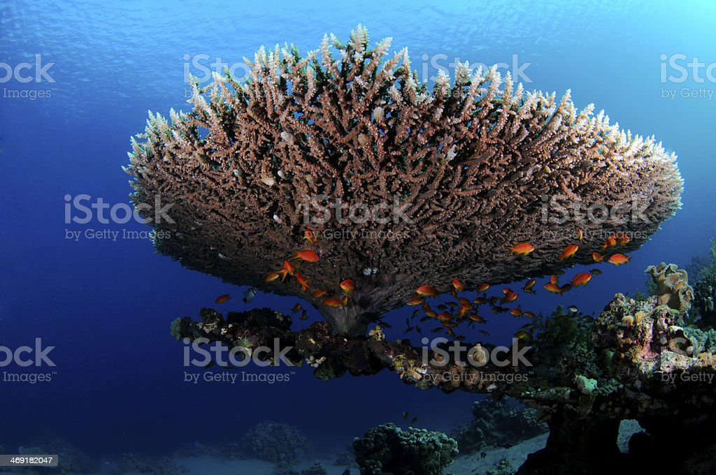 Giftbox With Label Overhead Stock Photo · Table Coral (Acropora Pharaonis)  In Red Sea Stock Photo ...