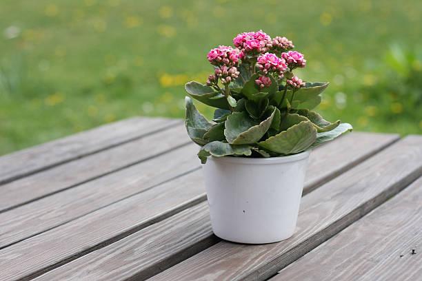 Table Flower bildbanksfoto