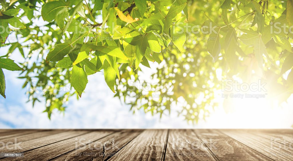 table in spring royalty-free stock photo