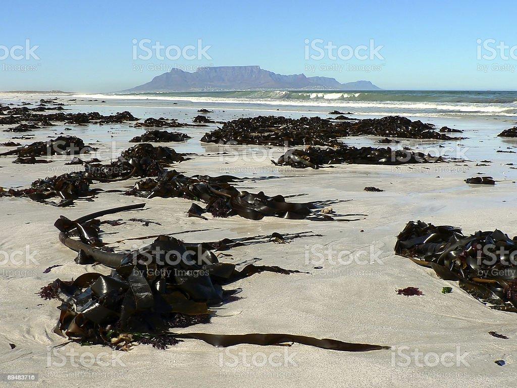Table Mountain from Kelp Strewn Beach stock photo