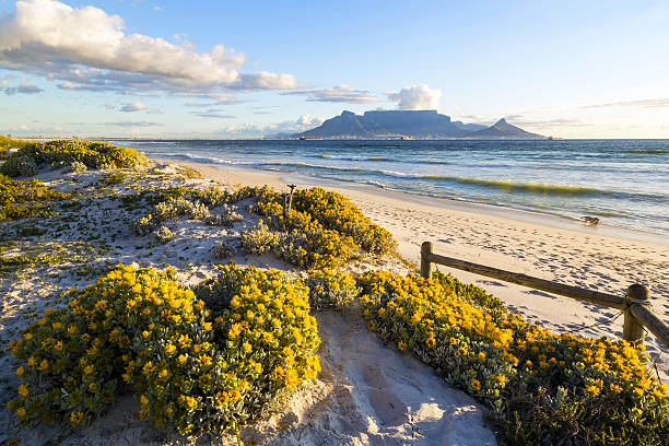 table mountain, south africa - cape peninsula stock pictures, royalty-free photos & images