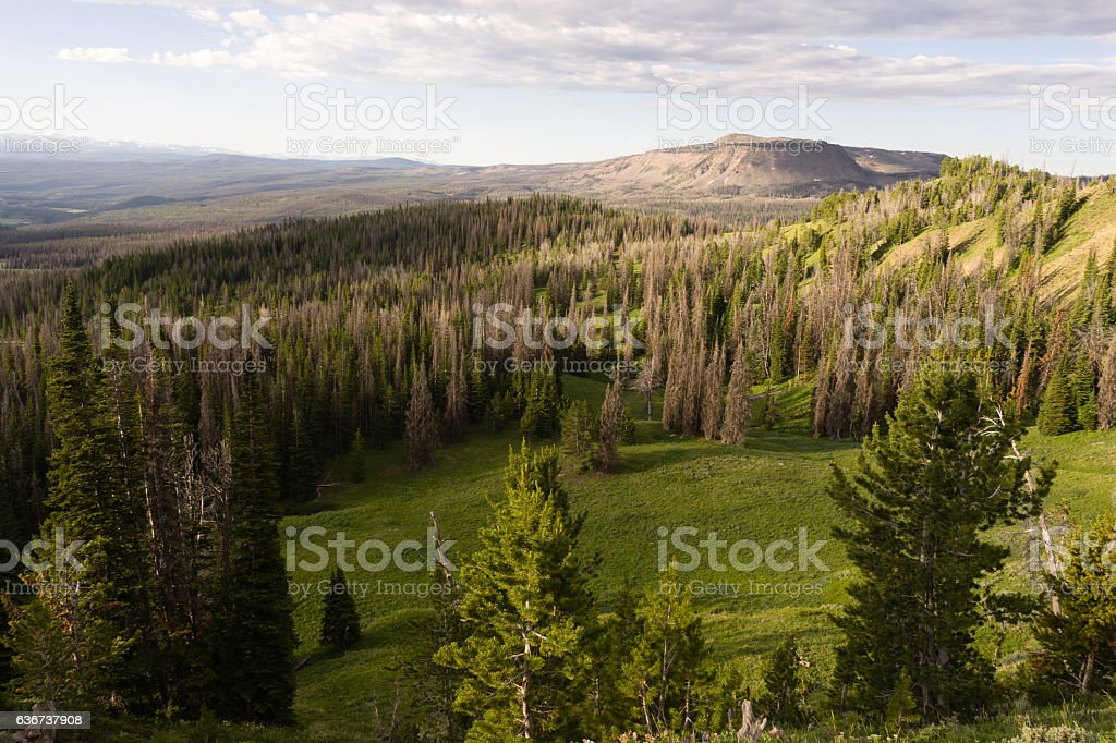 Table Mountain Wyoming Backcountry Forest stock photo