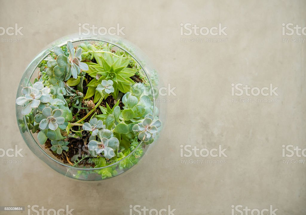Table top plant decorative garden in a glass vase stock photo