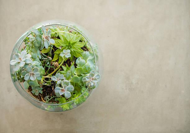tischplatte pflanze dekorative garten in einem glas vase - terrarienpflanzen stock-fotos und bilder