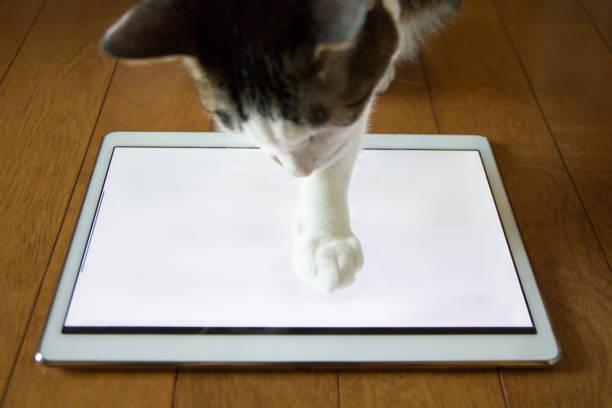Tablet and cat picture id912147286?b=1&k=6&m=912147286&s=612x612&w=0&h=zmqg25ke4cujhe26eynnhm j5zho3t3w4vaku7mplg8=
