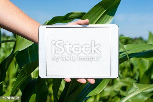 istock Tablet held by hand in corn field 497548108