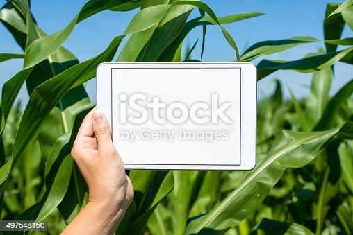 istock Tablet held by hand in corn field 497548150