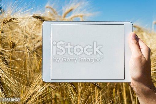 istock Tablet held by hand in oat field 497548432