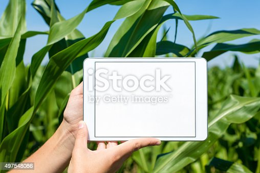istock Tablet held by hands in corn field 497548086