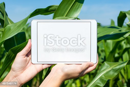 istock Tablet held by hands in corn field 497548174