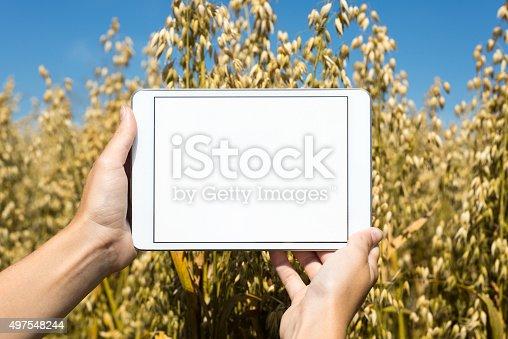 istock Tablet held by hands in oat field 497548244