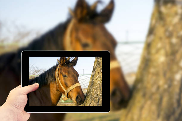Tablet photography concept a brown horse in the forest picture id653966222?b=1&k=6&m=653966222&s=612x612&w=0&h=r5xuygzneez6orfoztk g4ytlsvntmrjgya  regtiy=