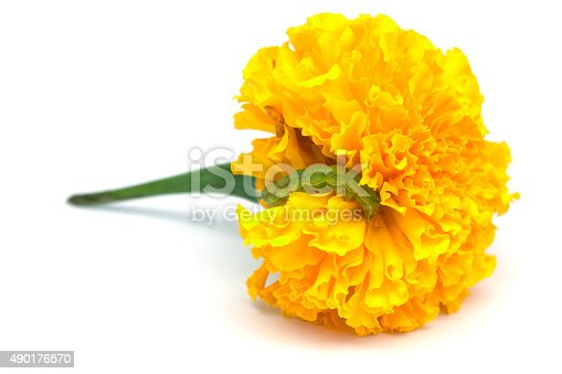 istock Tagetes Erecta Flower With Worm 490176570