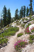 On the Eastern side of Lake Tahoe, the Tahoe Rim Trail at times does not offer a view of the lake, favoring instead views of flowers, pine trees, and Washoe Valley.