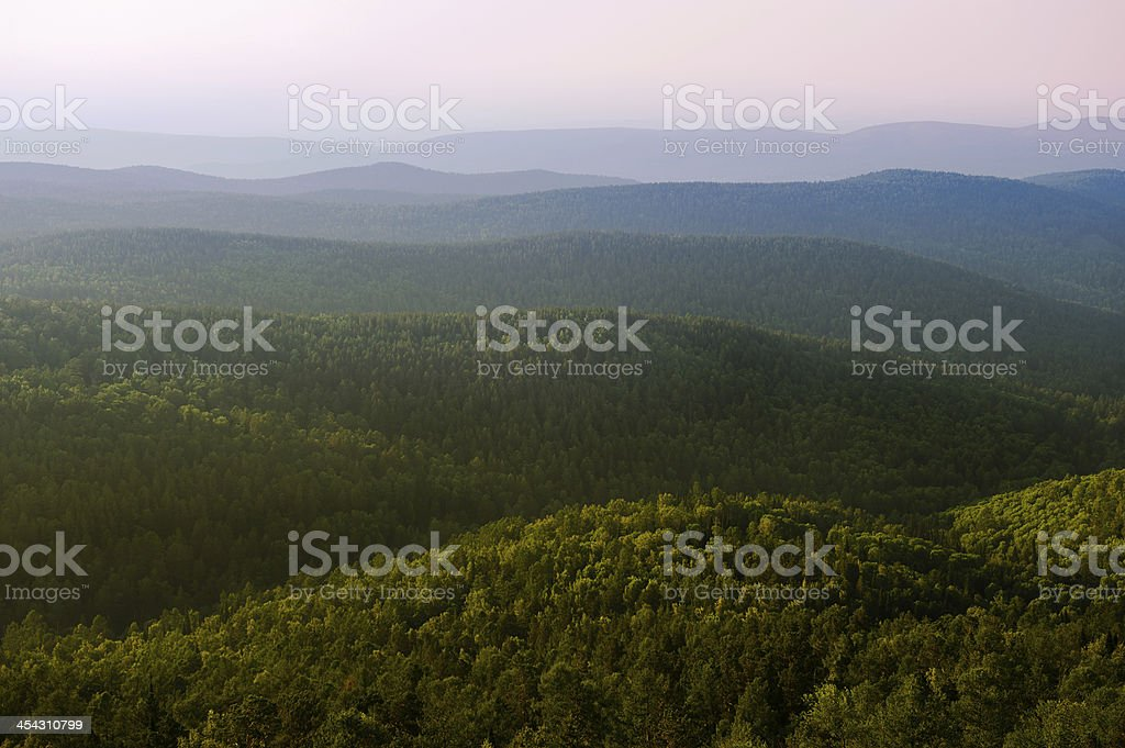 Taiga stock photo