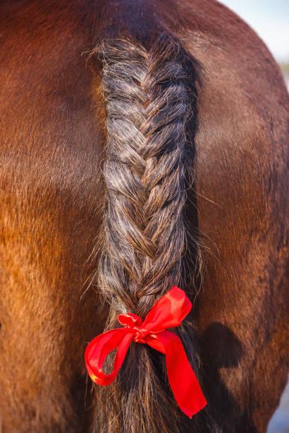 schwanendekoration mit rotem band. pferdeschwanz - kurze haare flechten stock-fotos und bilder