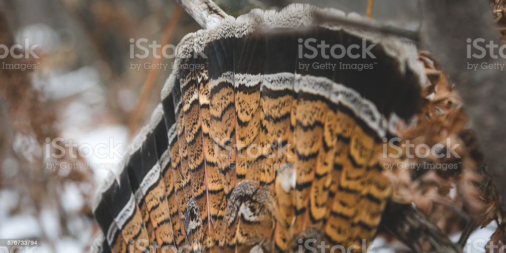 Tail Fan stock photo