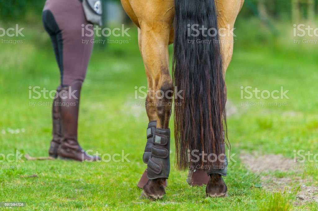 tail from a brown horse with a horsewoman stock photo