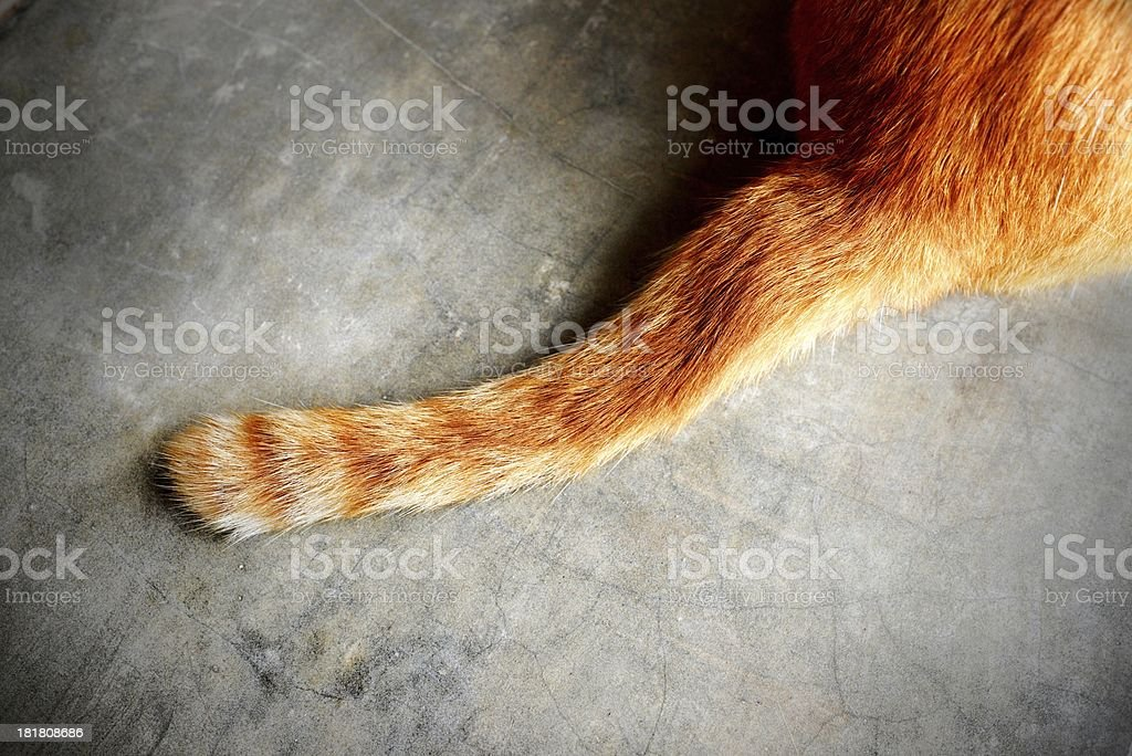 tail of a cat stock photo