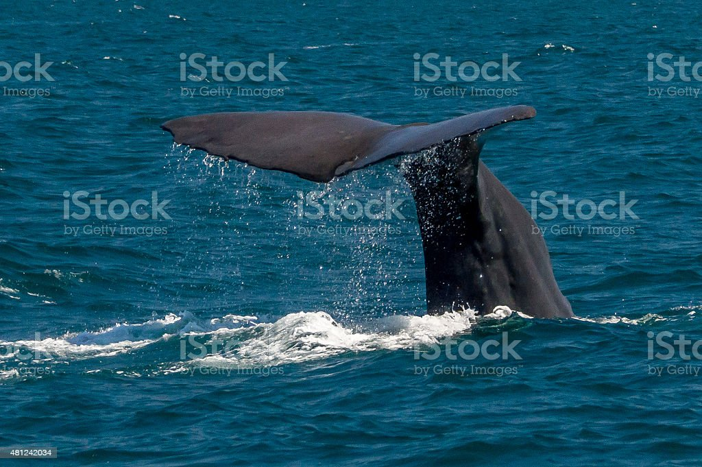 Tail of a whale stock photo