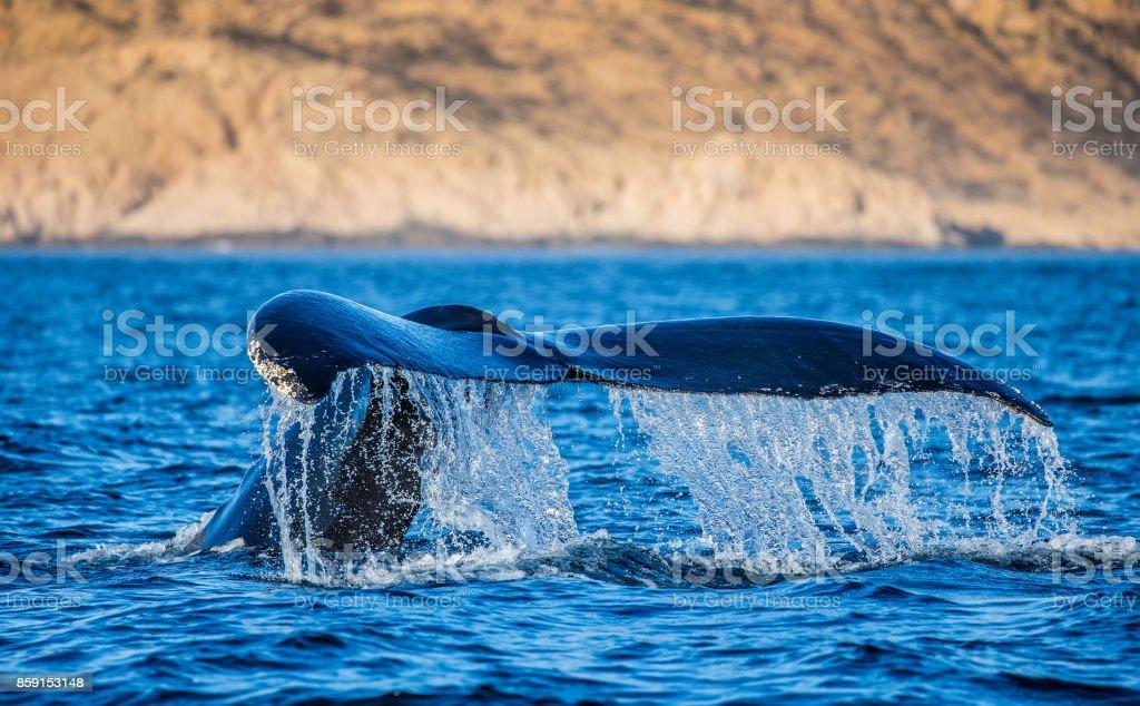 Cola de la ballena jorobada. México. Mar de Cortés. - foto de stock