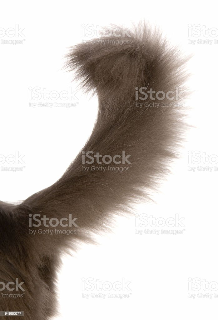 tail stock photo