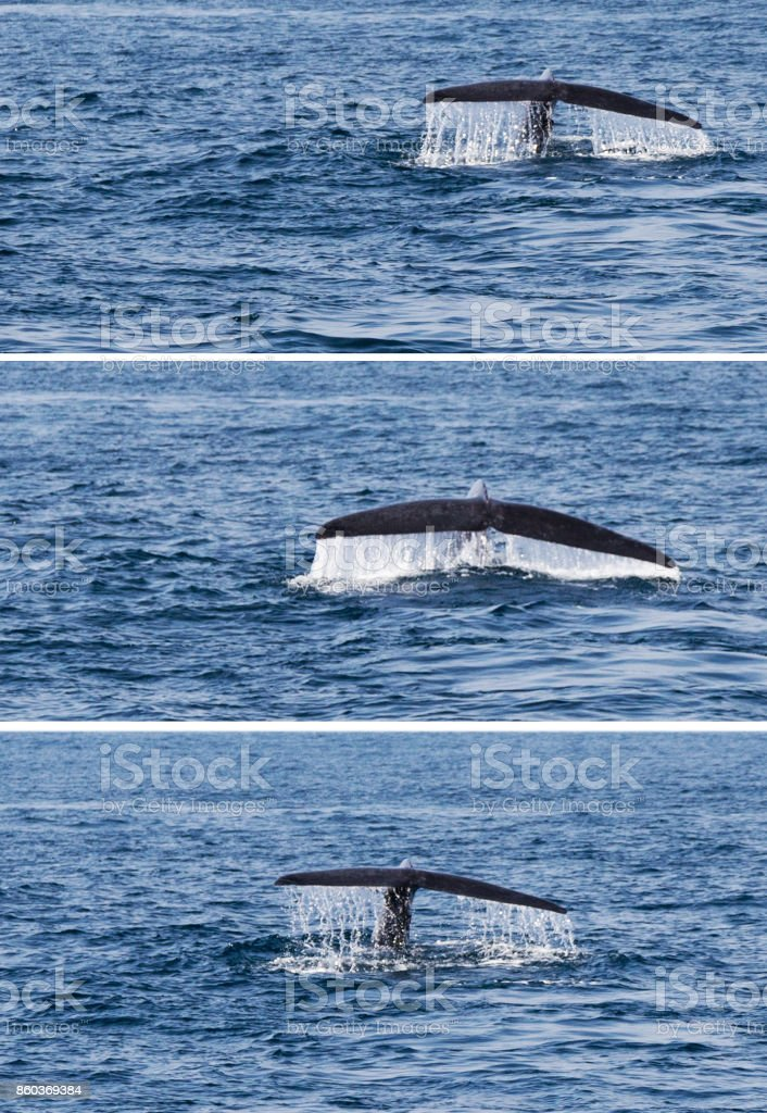 Tail whale set stock photo