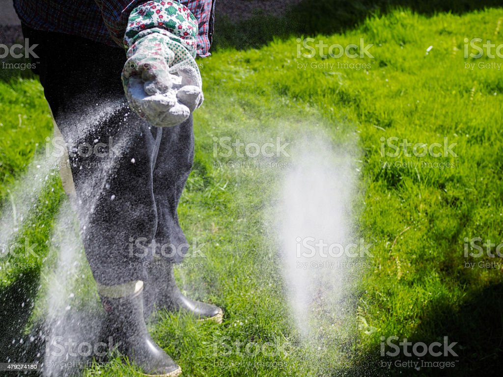 Take care of the lawn stock photo