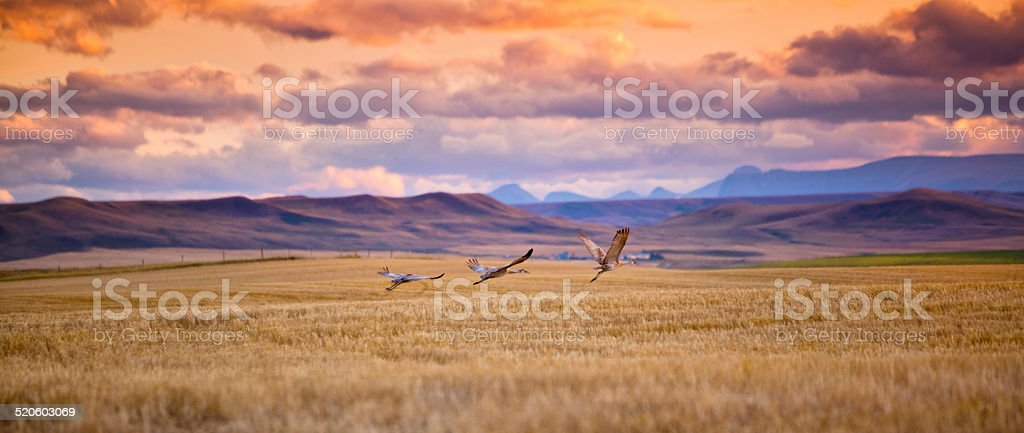 Take flight stock photo