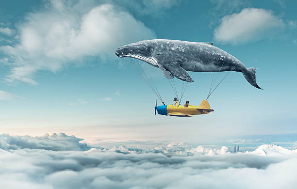Take me to the dream the dream to fly dreamlike stock pictures, royalty-free photos & images