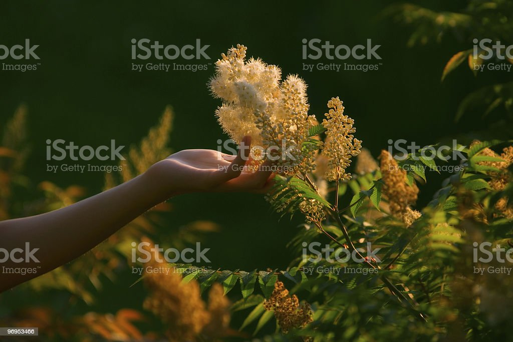 take pollen by the hand! royalty-free stock photo