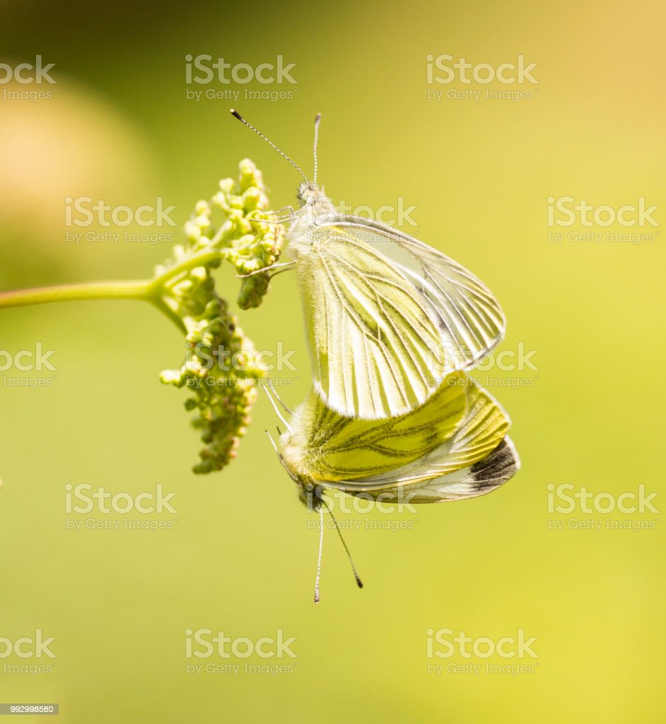 Take Two Stock Photo - Download Image Now - iStock