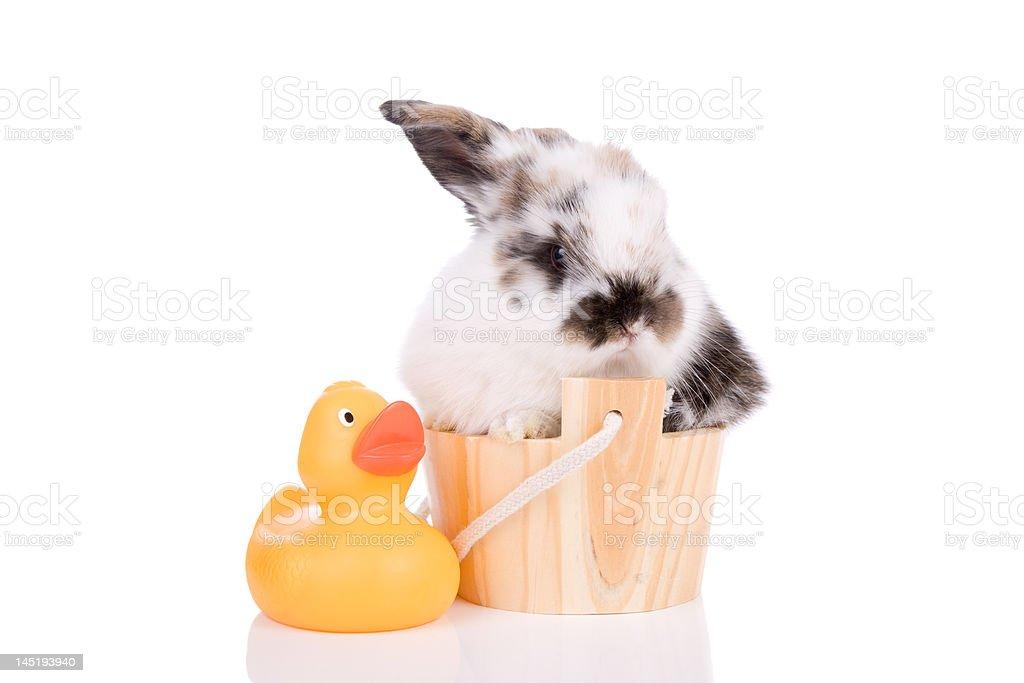 Ein Bad mit – Foto