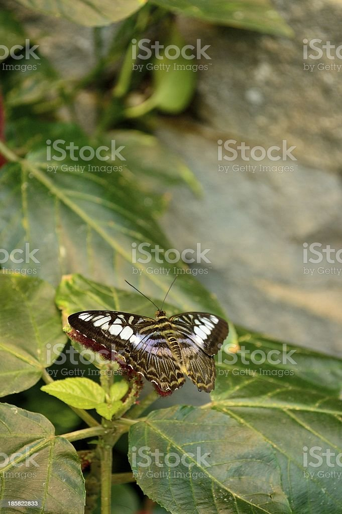 taking a nap at the top royalty-free stock photo