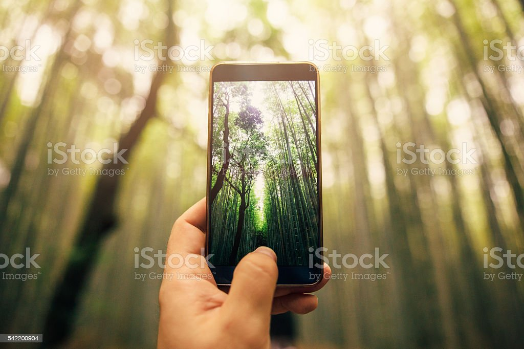 Taking a photo of bamboo forest stock photo