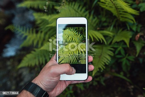Taking a macro picture of ferns with a mobile phone