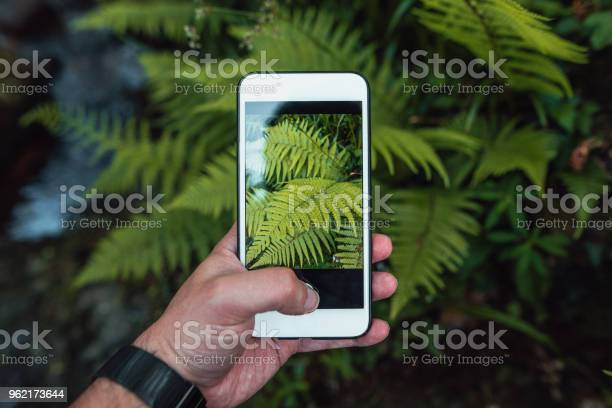 Photo of Taking a picture of ferns