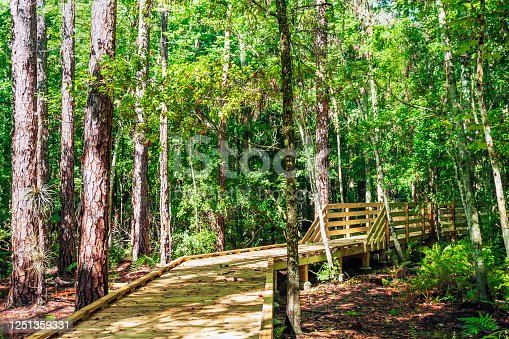 Taking a stroll through the forest surrounding the Boardwalk within Shingle Creek Park & Preserve in Kissimmee, Florida