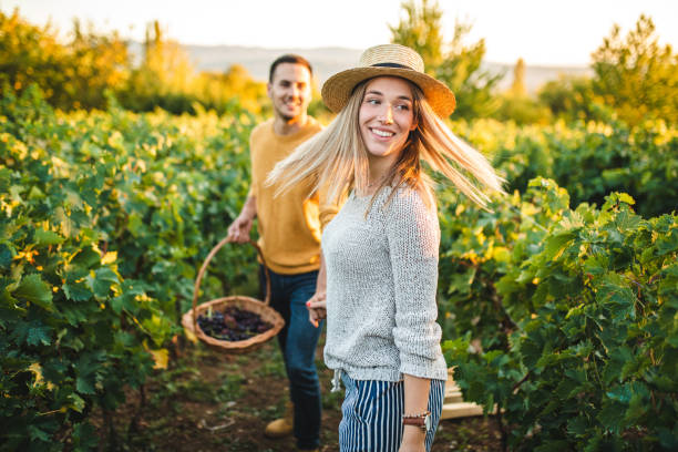 Taking a stroll through the vineyards on sunny afternoon stock photo