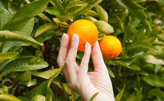 Taking a tangerine