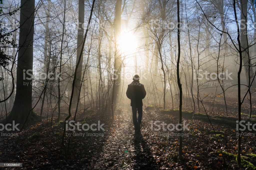 Taking A Walk In The Woods royalty-free stock photo