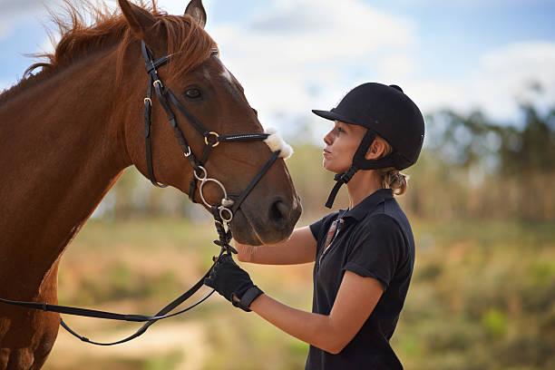 cuidado de su mejor amigo - equitación fotografías e imágenes de stock