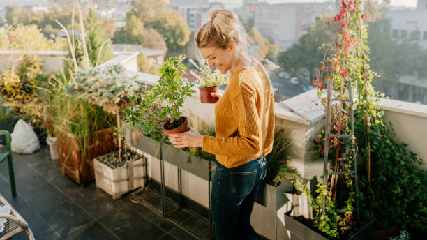 Taking care of my plants Photo of young woman taking care of her plants on a rooftop garden gardening stock pictures, royalty-free photos & images